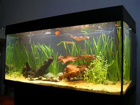10 amazing aquariums