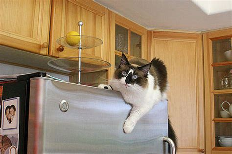 Why Do Find Things Why Do Cats Do Things Find Out Answers Here Iheartcats
