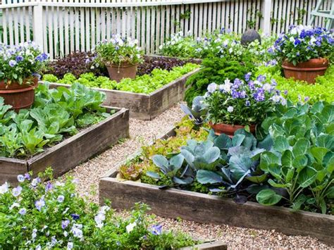 plant  vegetable garden  raised beds hgtv