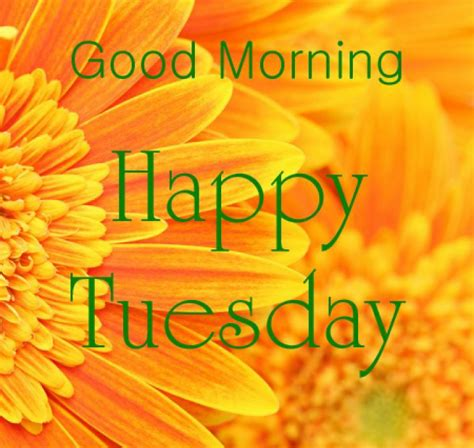 tuesday images morning happy tuesday image pictures photos and