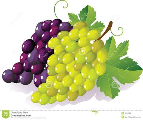 imagenes de uvas vector uva ilustraci 243 n del vector ilustraci 243 n de cubo planta