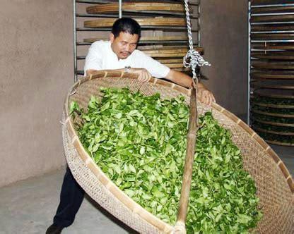 Teh Hijau Istimewa Cap Pucuk teh termahal di dunia bebeja
