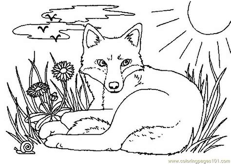 coloring page of a fox face free coloring pages of fox face