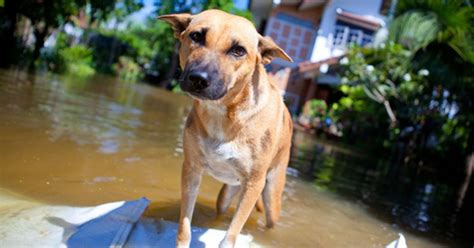 can dogs sense can dogs sense earthquakes cat and care petpremium
