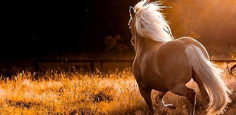 hardest horse quiz youll