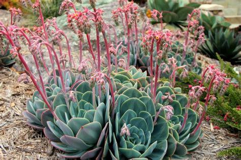 sukkulenten garten tolle design pflanzen sukkulenten garten