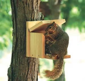 squirrel feeder diy squirrel feeder