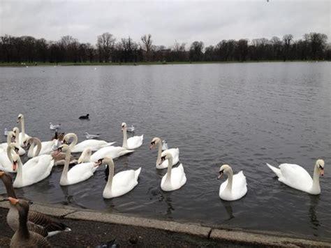 swan boats london 11 best travel london england images on pinterest