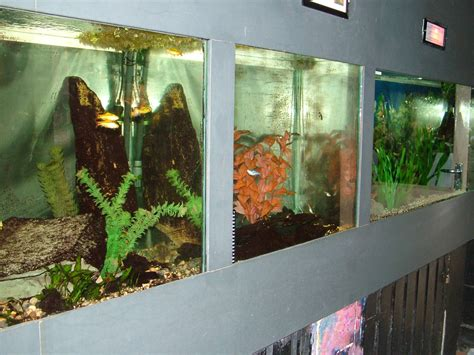 aquarium bathtub tropical freshwater tanks at matlock bath aquarium 14 02