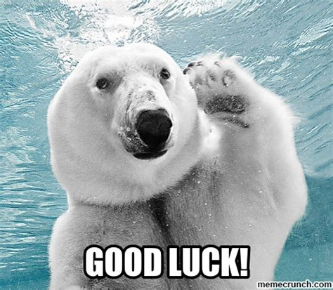 Good Luck Meme - good luck animal meme www pixshark com images