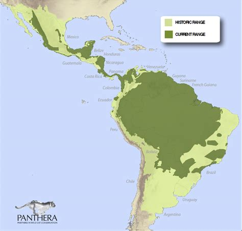 where do jaguars live in south america jaguar conservation gets a boost in and central america