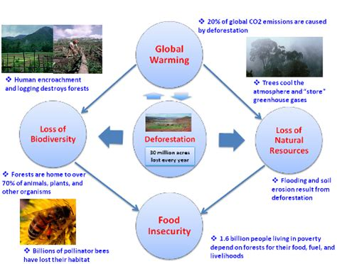 deforestation diagram deforestation disastrous consequences for the climate and
