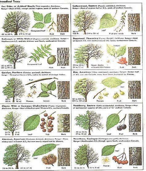 how to identify fruit trees by leaf best 25 tree identification ideas on tree