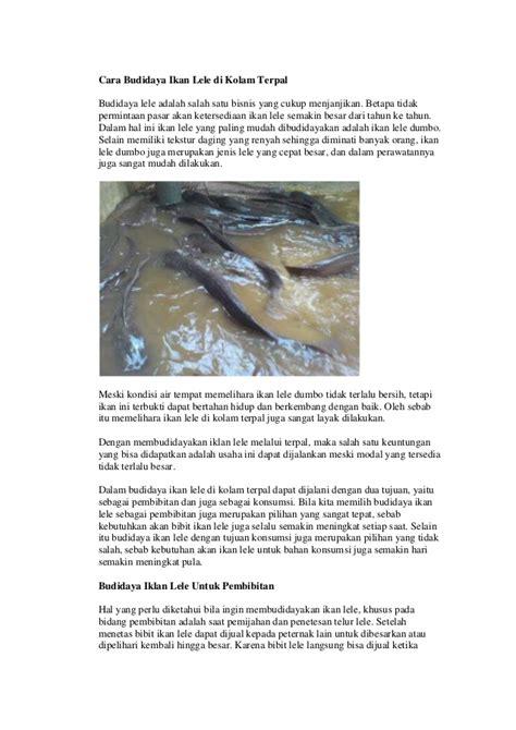 Bibit Lele Di Medan cara budidaya ikan lele di kolam terpal