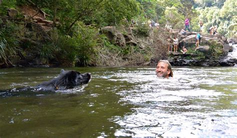 gardeners falls maleny where boys fall pepe will follow at popular waterhole