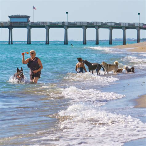 beaches where dogs are allowed top ten list of the nicest sarasota beaches in florida must do visitor guides