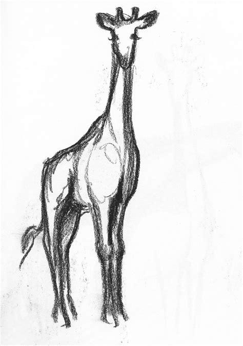 giraffe  drawing   clip art