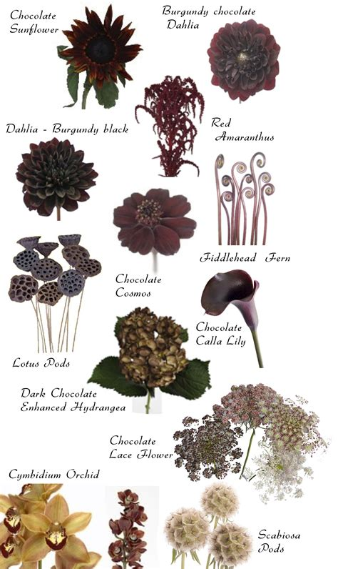 flowers by color flower names by color flowers flower and floral
