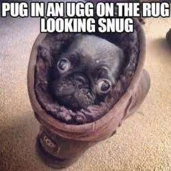 Funny pug pictures funny pug memes cute pug puppies pugs in clothes