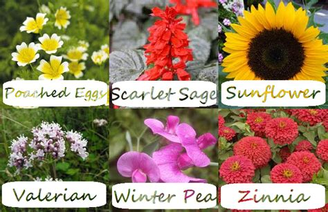 list of flowers jeanine beneficial edible and useful flowers