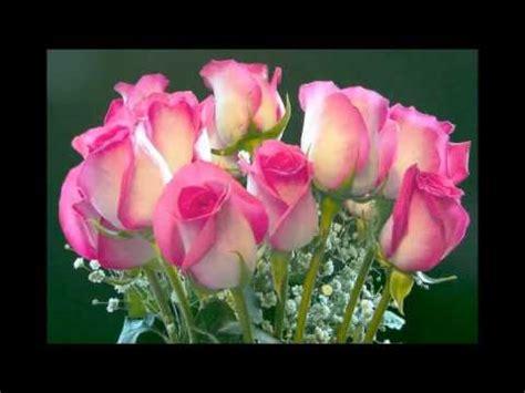 imagenes de flores naturales bonitas image gallery las rosas mas lindas
