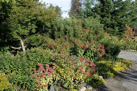 fuchsia display gardens of the pacific northwest