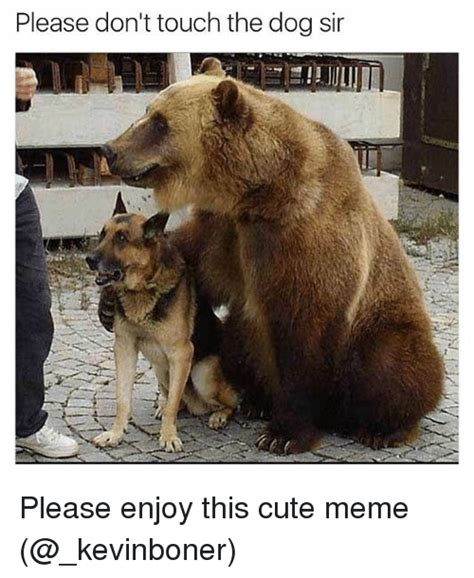 T Dog Meme - please don t touch the dog sir please enjoy this cute meme