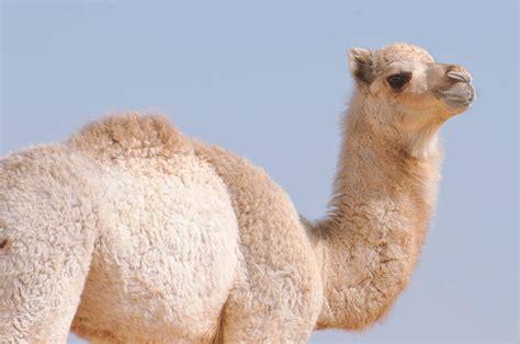 desert animals animal facts encyclopedia