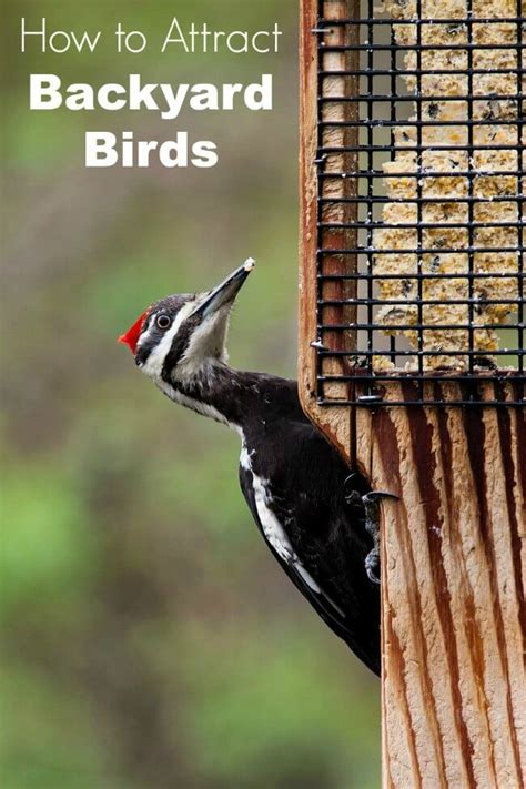 how to attract wildlife to your backyard how to attract birds to your yard family focus blog