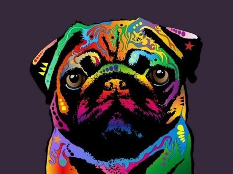 rainbow pug rainbow pug pugs and some other critters