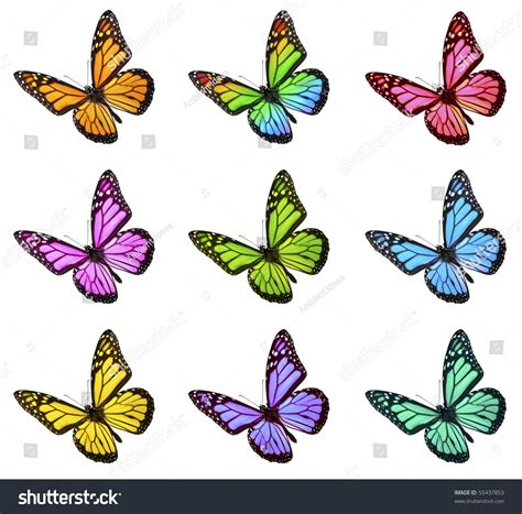 monarch color monarch butterfly various colors stock photo 55437853