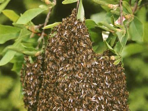 accueillir les abeilles 224 la ruche