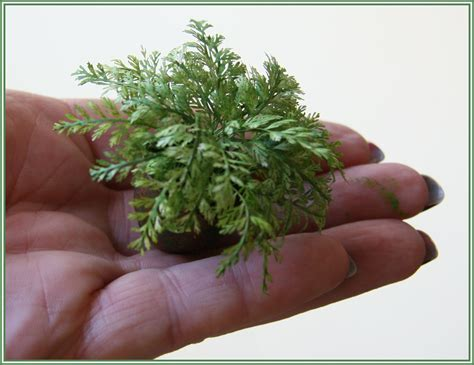 printable leaves for miniature plants chrystal s designs miniture flowers and plants