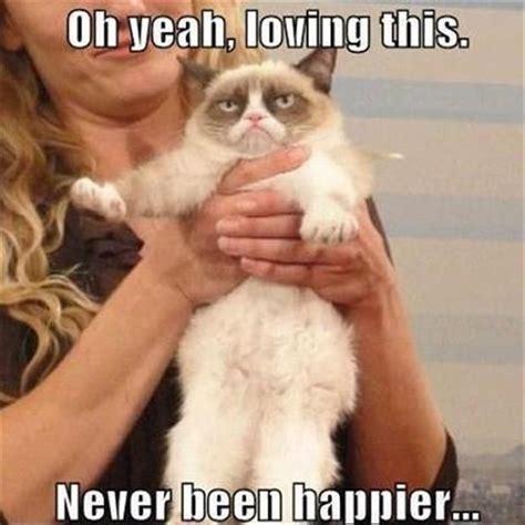 Sarcastic Cat Meme - grumpy cat funny grumpy cat humor grumpy cat meme
