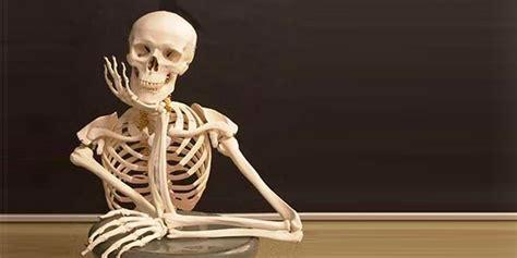 imagenes de calaveras esperando 191 c 225 scara de arroz como sustituto de huesos humanos