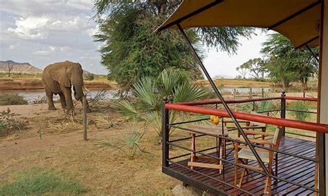 kenya safari with airfare from indus travels in masai mara national reserve groupon getaways