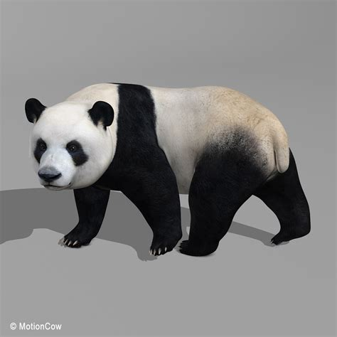 panda bear motioncow