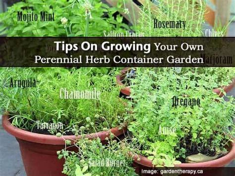 10 tips for growing your own herb garden outdoor living how to tips on growing your own perennial herb container