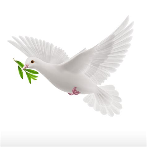 cartoon white dove cartoon flight wing png image for