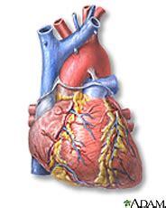 Fisiologi Manusia Silverthorn Ed 6 jantung cor referensi asuhan keperawatan askep