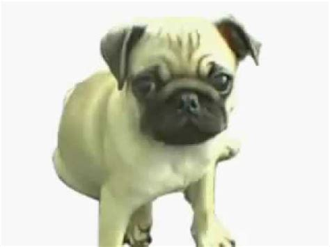 pug songs doug the pug song from the hangover doovi