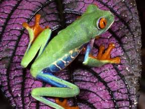 colorful frogs colorful frogs