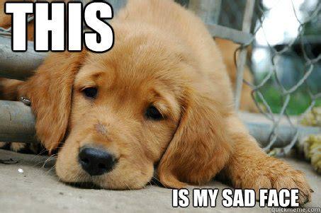 sad puppy love sad face memes quickmeme