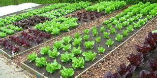 Pupuk Cair Grow More how to start an organic garden