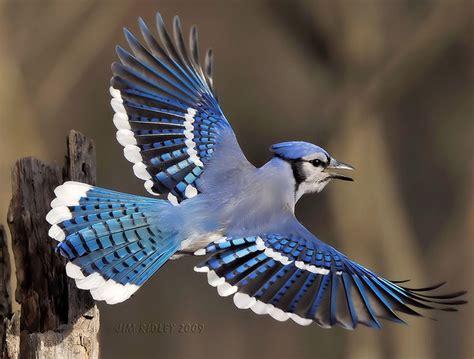 breathtaking in flight birds photography