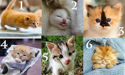 5 Model Rambut Aneh Dan Nyeleneh by Kucing Kucing Yg Menggemaskan