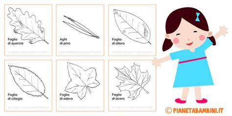 le parti fiore scuola primaria le parti della pianta schede didattiche per la scuola