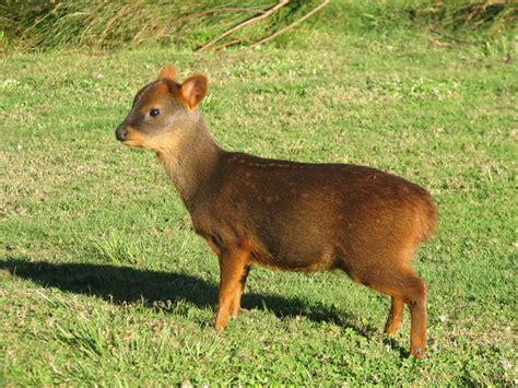 animales que habitan en chile apuntes de derecho animales que habitan en chile apuntes de derecho