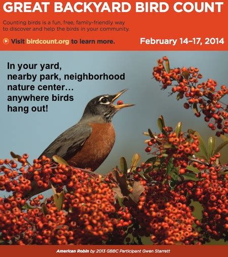 great backyard birdcount gbbc 2014 get ready get set count just 15 minutes this