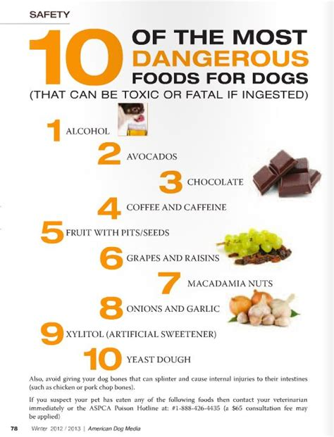 foods poisonous to dogs poisonous foods for dogs health and exercise